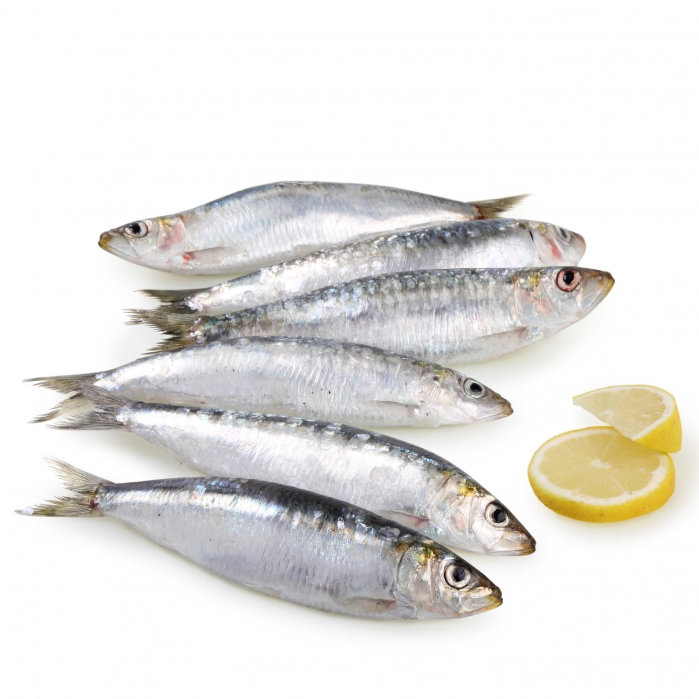 La sardina, un peix blau amb grans propietats