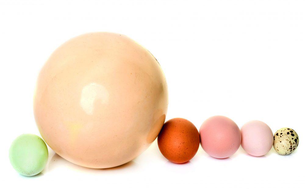 Diferents tipus d'ous