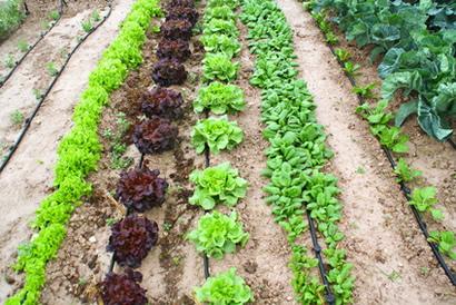 """L'essència de la sobirania alimentària resideix en el """"poder decidir"""""""