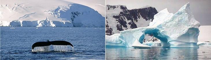 Oceà Antàrtic