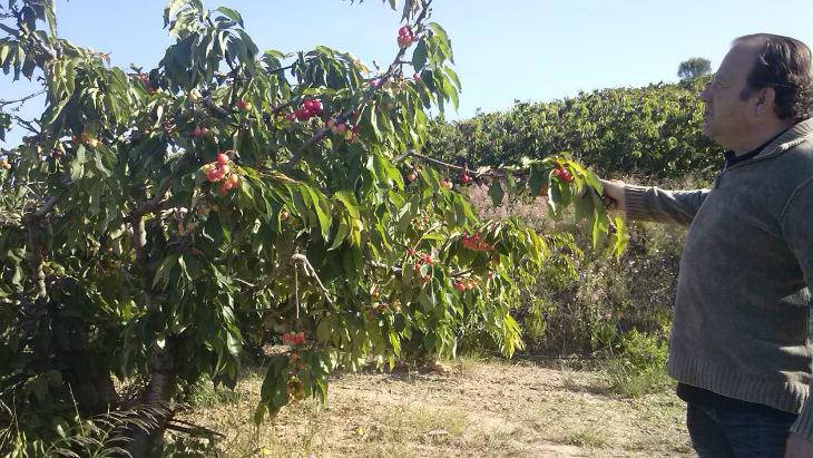 L'Origen_Fruits Montmany1