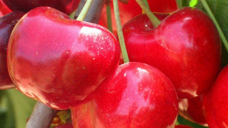 L'Origen_Fruits Montmany3