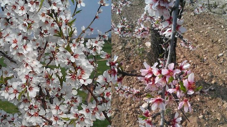 Primavera_magi