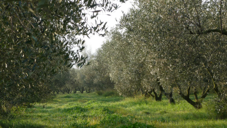 Primavera_organicfruit