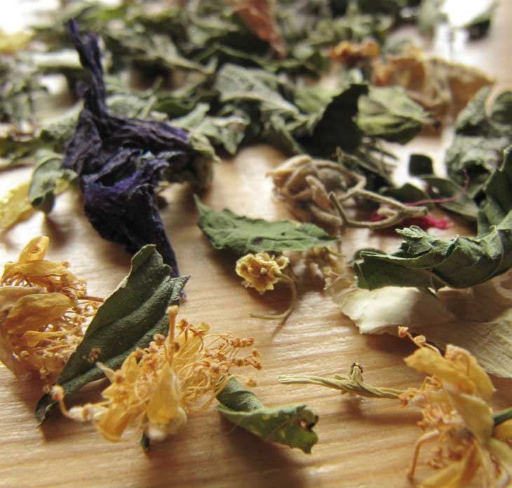 Herbes de Cal Calsot