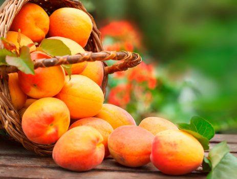 Propietats nutricionals i beneficis per a la salut de l'albercoc