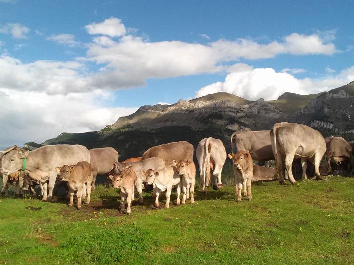 Vaques muntanya Ecopyrene-730