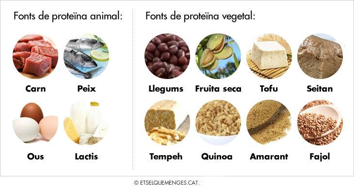 proteina-cat