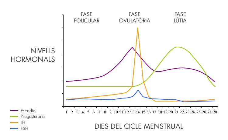 Ajusta l'esport al cicle menstrual