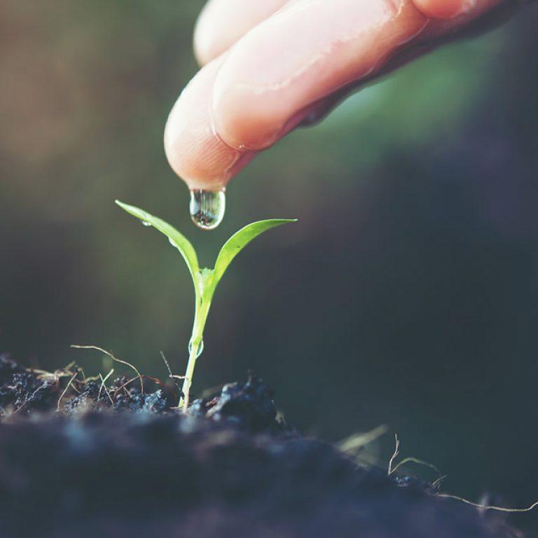 Dietes depuratives i hipotòxiques. Aprèn a depurar l'organisme a la primavera!