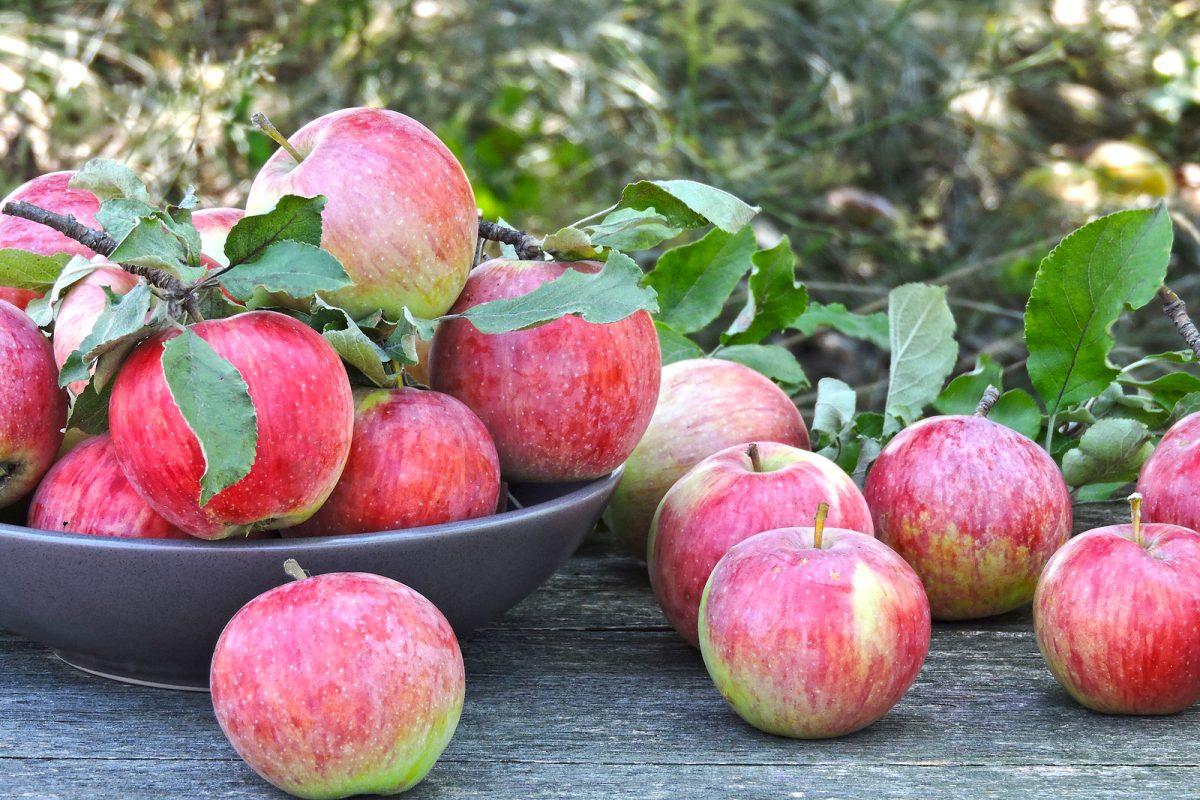 pell de la poma contra l'obesitat
