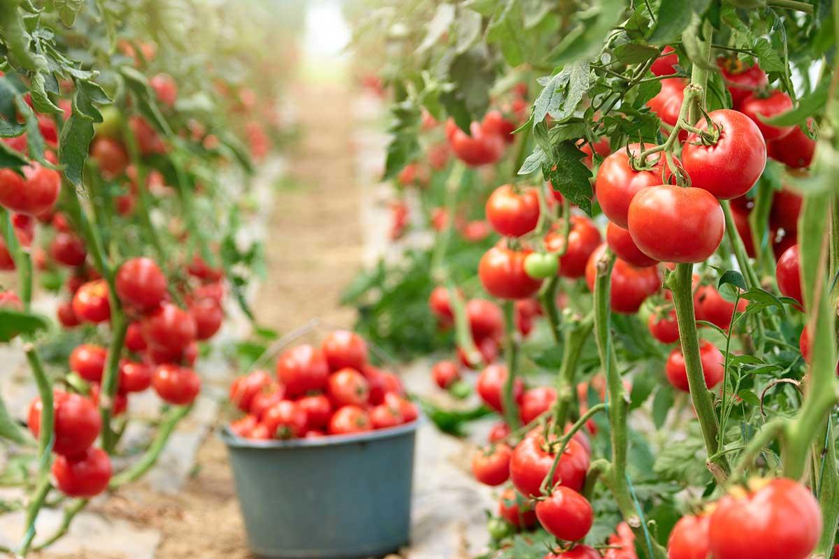 verdures i fruites de juny