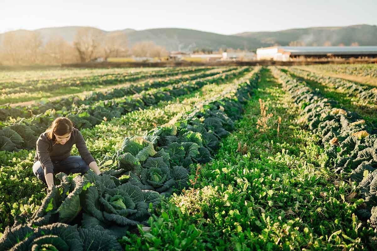 sistemes de producció alimentaria