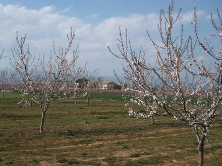 foto La Montoliva: diversificant el paisatge agrari - 1