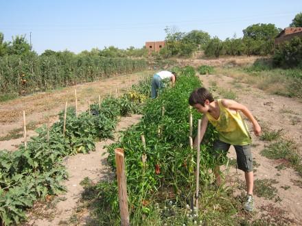 foto L'Hort de Ca la Cistellera: passió pel conreu ecològic - 2