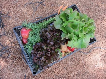 foto L'Hort de Ca la Cistellera: passió pel conreu ecològic - 3