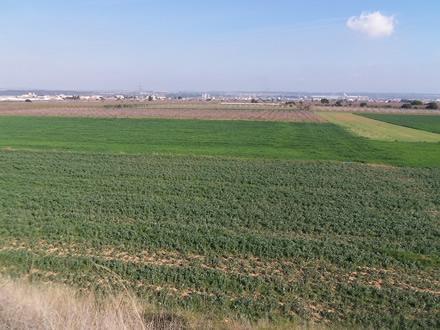 foto La Montoliva: diversificant el paisatge agrari - 2