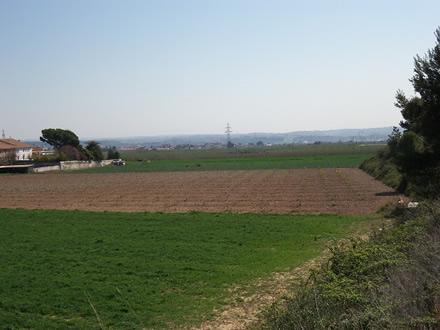 foto La Montoliva: diversificant el paisatge agrari - 3