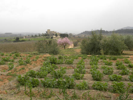 foto Ecocalçots: agroecològics per convicció - 3
