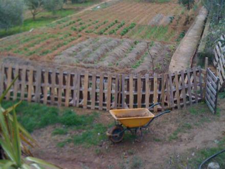 foto Ecocalçots: agroecològics per convicció - 4