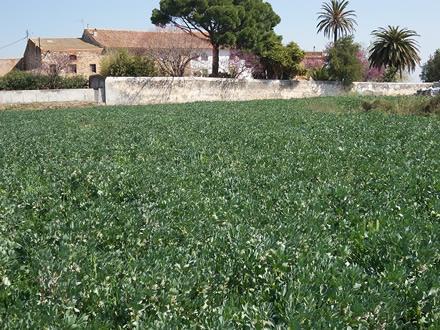 foto La Montoliva: diversificant el paisatge agrari - 4