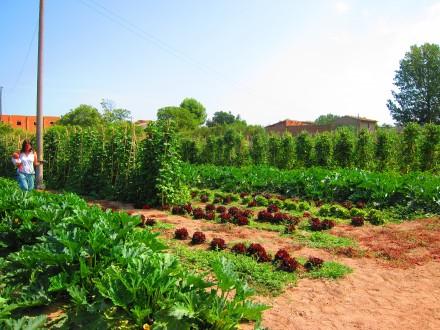 foto L'Hort de Ca la Cistellera: passió pel conreu ecològic - 4