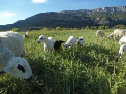 foto Cal Tomaso: xisqueta a les faldes del Montsec - 3