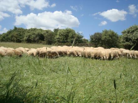 foto Cal Tomaso: xisqueta a les faldes del Montsec - 4