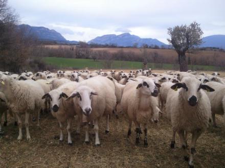 foto Cal Tomaso: xisqueta a les faldes del Montsec - 5