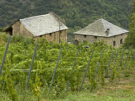 foto El Batlliu de Sort: vinyes a l'alta muntanya - 1