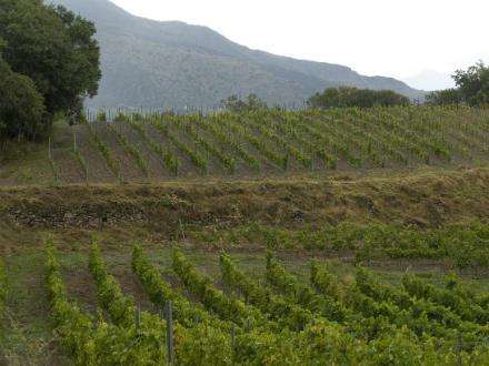 foto El Batlliu de Sort: vinyes a l'alta muntanya - 2