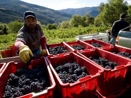 foto El Batlliu de Sort: vinyes a l'alta muntanya - 3