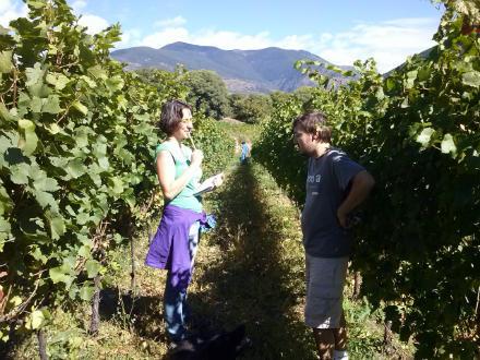 foto El Batlliu de Sort: vinyes a l'alta muntanya - 4