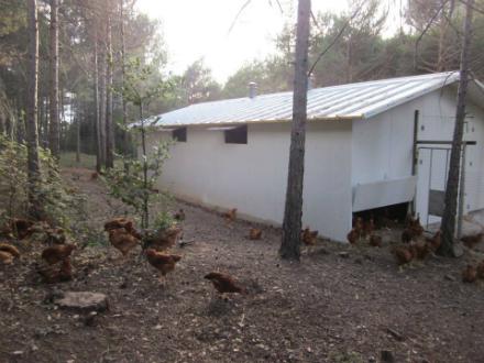 foto Cal Roio: pollastre agroecològic al Berguedà - 2