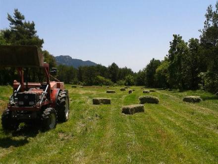 foto Cal Roio: pollastre agroecològic al Berguedà - 5