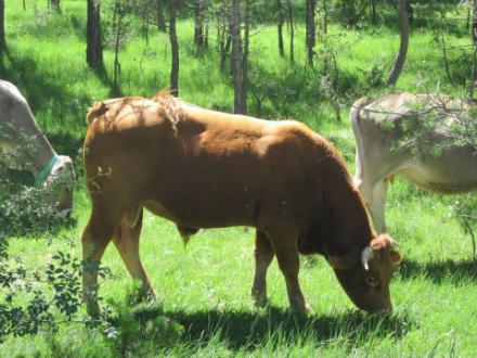 foto Cal Roio: pollastre agroecològic al Berguedà - 8
