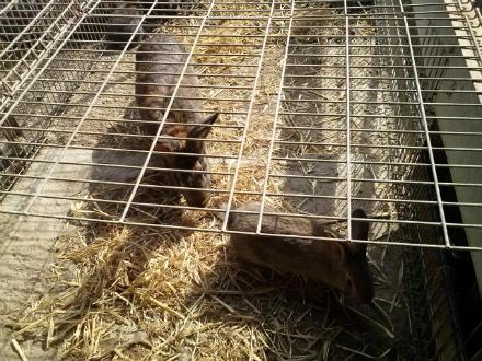 foto Granja Marina: el primer conill ecològic certificat - 5
