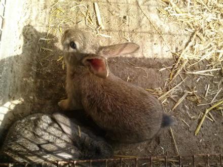 foto Granja Marina: el primer conill ecològic certificat - 6