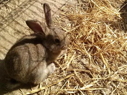 foto Granja Marina: el primer conill ecològic certificat - 7