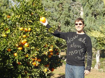 foto SAT Varsella: taronges i mandarines ecològiques, de l'Ebre! - 4