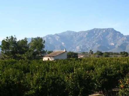 foto SAT Varsella: taronges i mandarines ecològiques, de l'Ebre! - 5