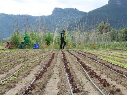 foto La Saó: horta, muntanya i treball en equip - 3