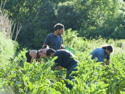 foto La Saó: horta, muntanya i treball en equip - 5