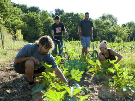 foto La Saó: horta, muntanya i treball en equip - 6