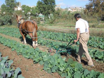 foto La Garbiana Pagesa: tradició rejovenida - 2