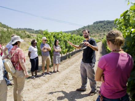 foto L'Olivera: producció ecològica arrelada als valors socials - 7