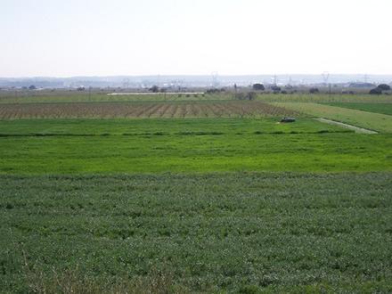 foto La Montoliva: diversificant el paisatge agrari - 7