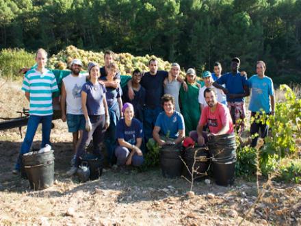foto L'Olivera: producció ecològica arrelada als valors socials - 9