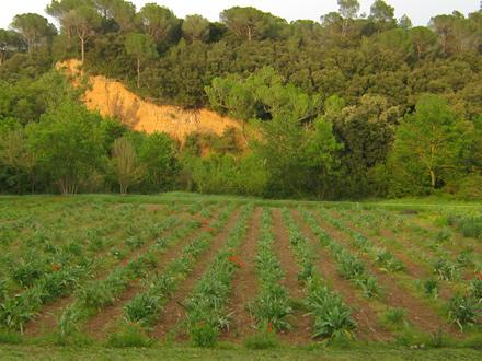 foto La Teulera: agroecologia d'arrel - 1