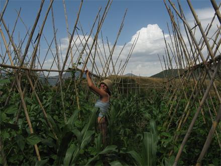 foto La nova pagesia: conreant salut - 1